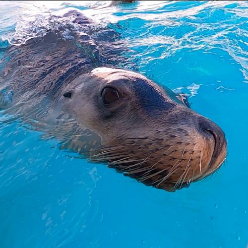 Meet a Seal in Coffs Harbour