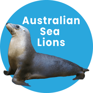Sea Lions in Coffs Harbour