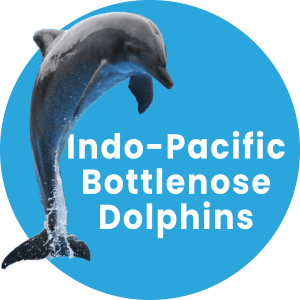 Dolphin Experience in Coffs Harbour