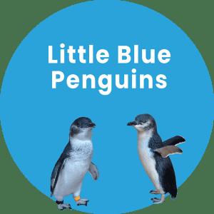 Little Blue Penguins Graphic
