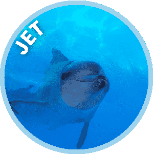 Jet the Dolphin