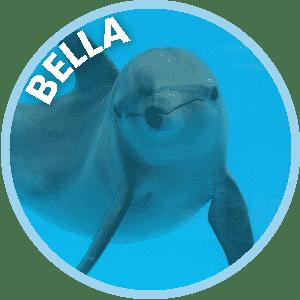 Bella the Dolphin