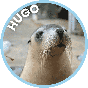 Hugo the Seal in Coffs Harbour