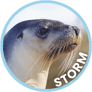 Storm the Seal in Coffs Harbour