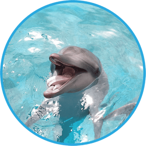 A cute indo-pacific bottlenose dolphin