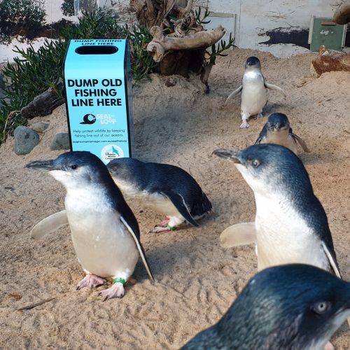 Seal the Loop in Coffs Harbour