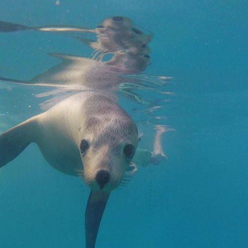 Seals Dolphin Marine Conservation Park