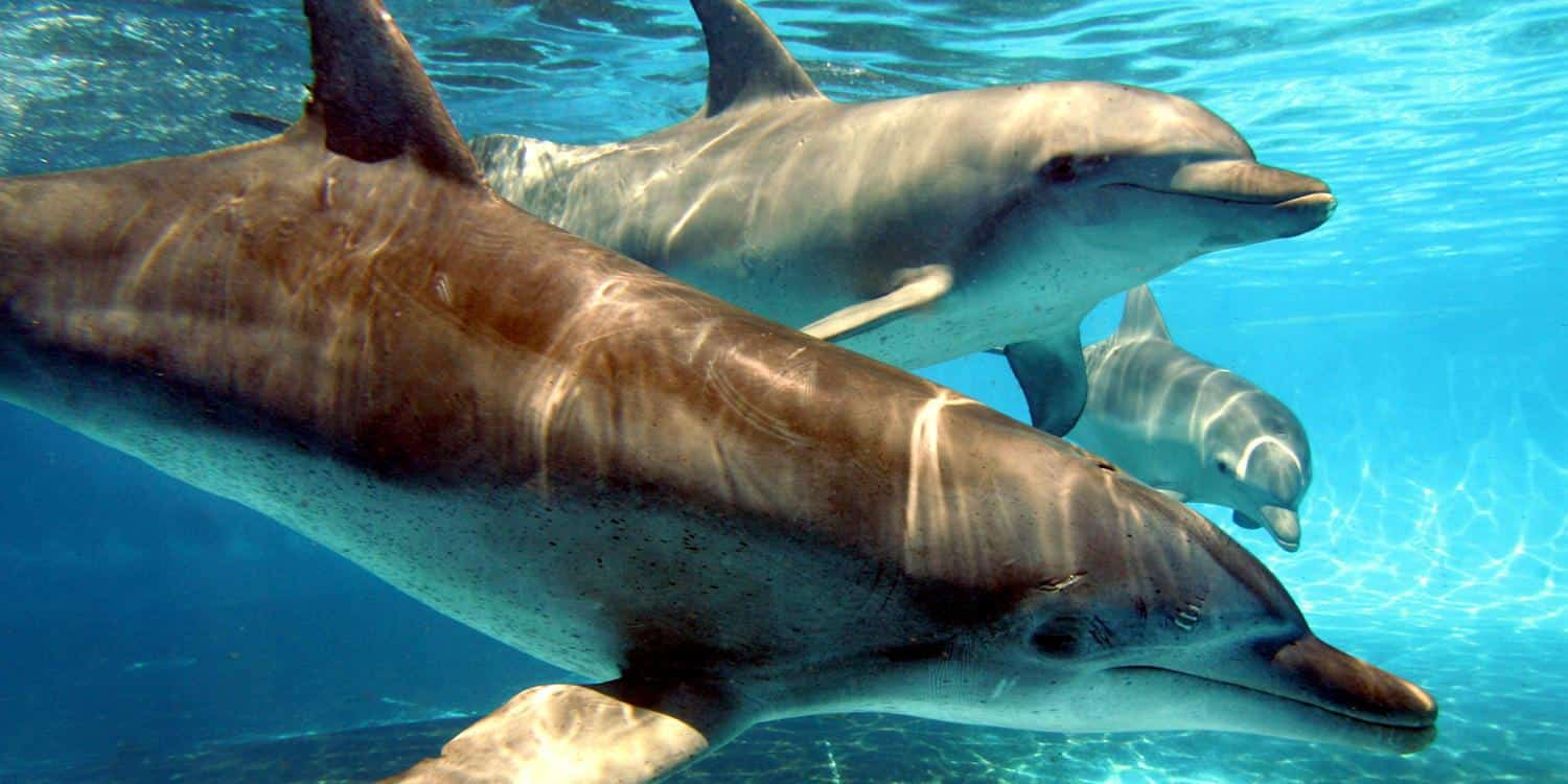 Dolphins In Coffs Harbour