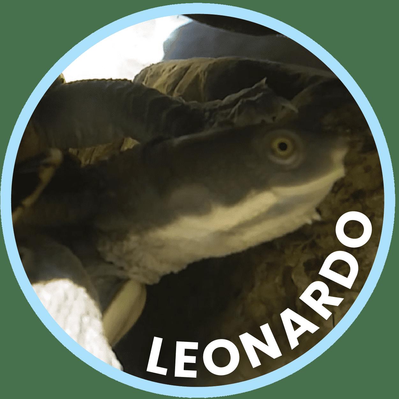 Leonardo Freshwater Turtle