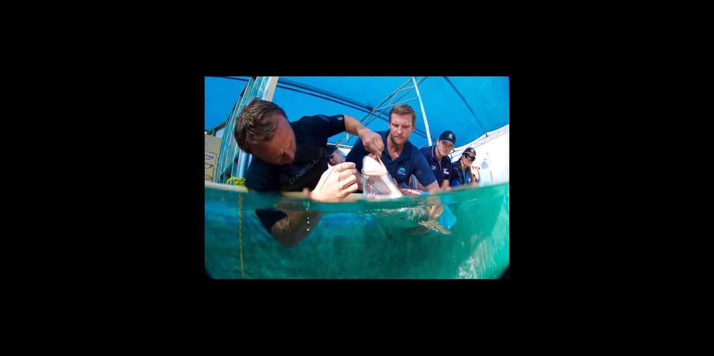Shark Rescue in Coffs Harbour