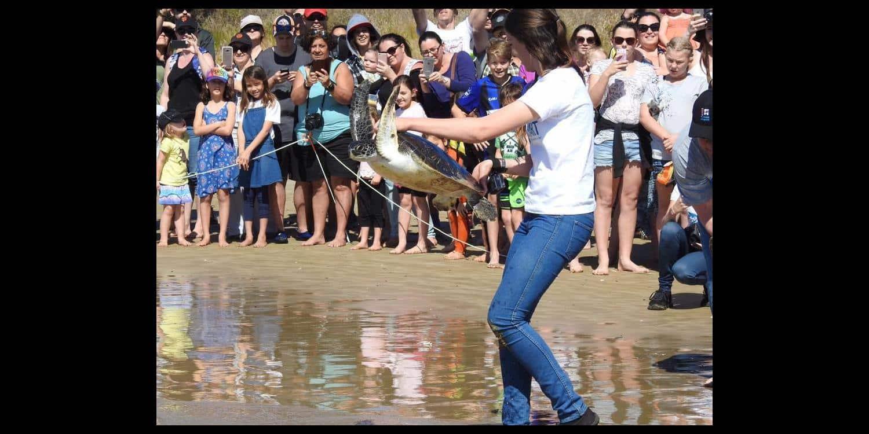 Turtle Rescue in Coffs Harbour