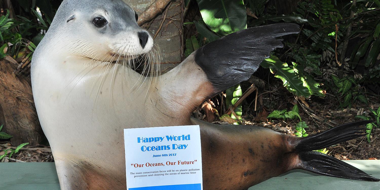 World Ocean Day in Coffs Harbour