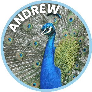 Andrew the Peacock
