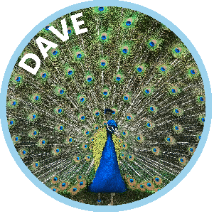 Dave the Peacock