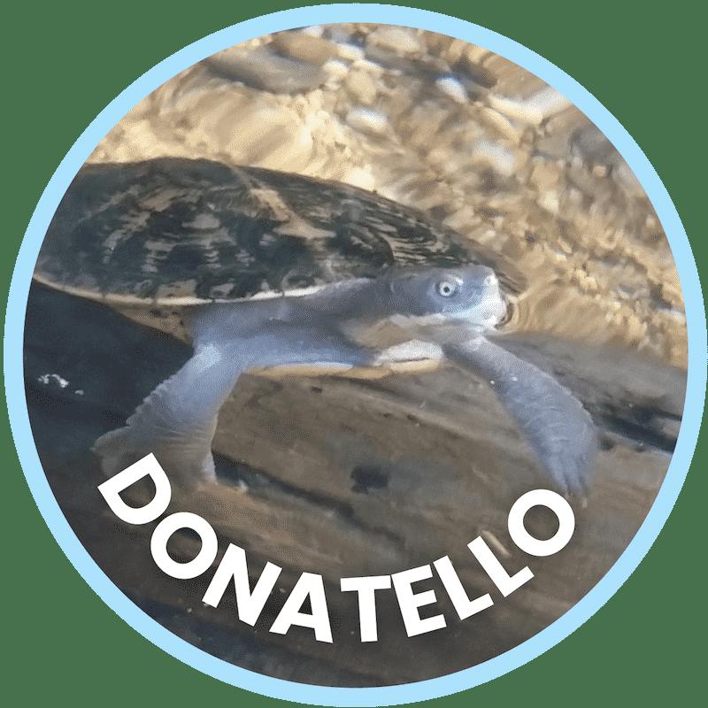 Donatello Freshwater Turtle