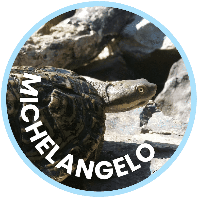 Michelangelo Freshwater Turtle