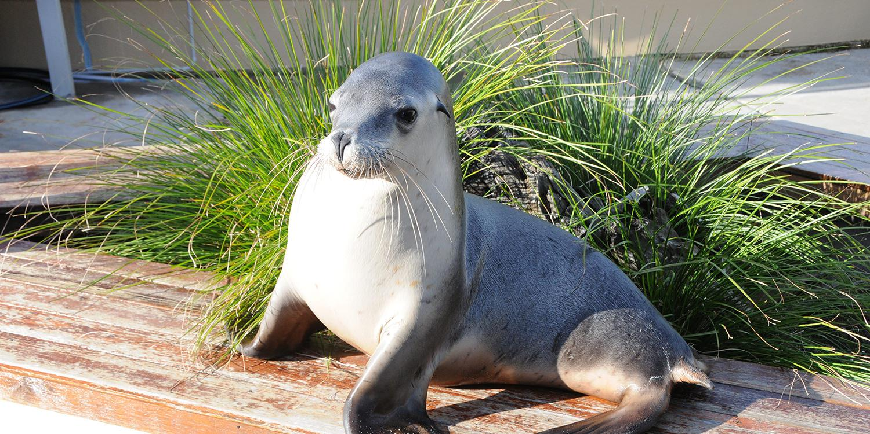 Seals in Coffs Harbour