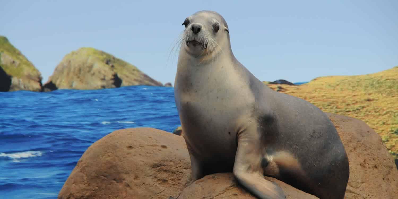 Seal Conservation Coffs Harbour