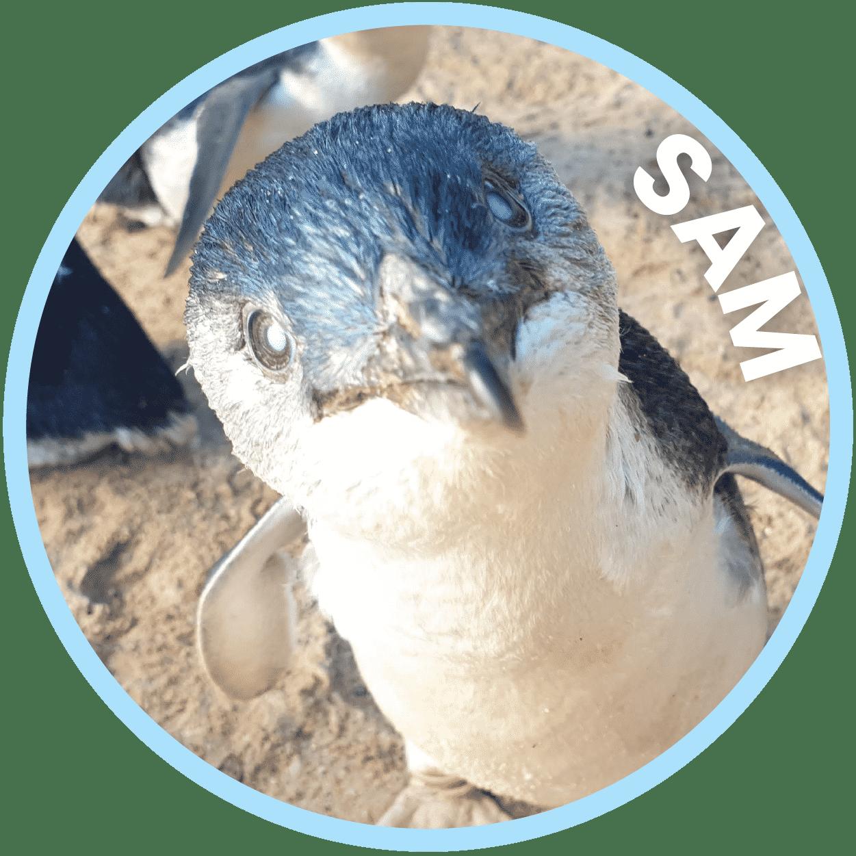 Sam Penguin Family