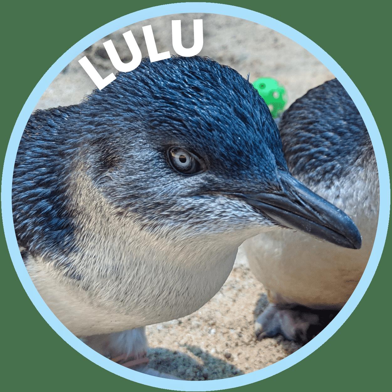 Lulu Penguin Family