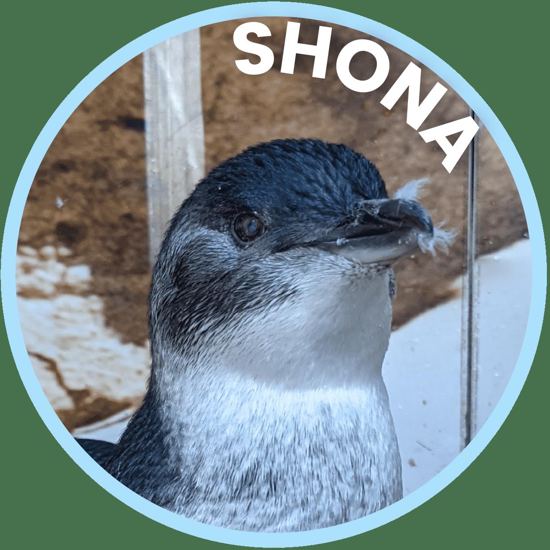 Shona Penguin Family